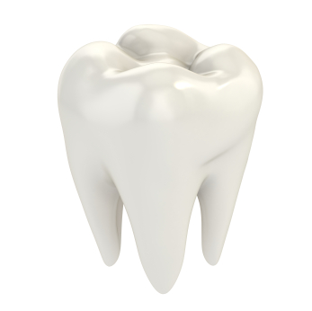 What Happens During Molar Uprighting?